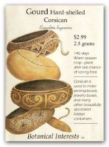 Gourd_corsican_lg