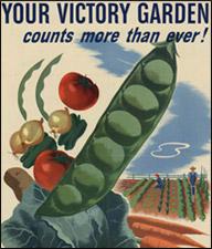 Victory Garden Counts