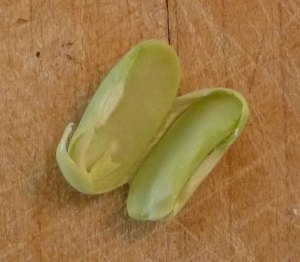 Inside a Broad Bean