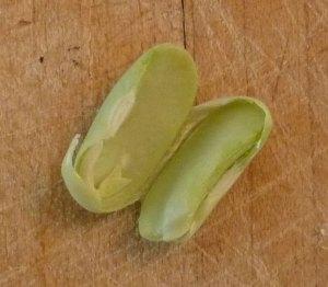 Inside a Broad Bean