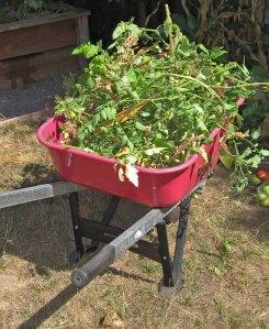 RecycledTomatoPlants