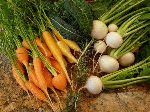 Carrots, turnips & herbs