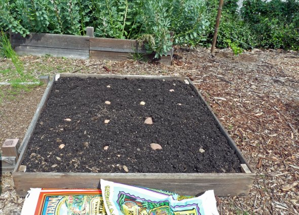 Raised bed potato planting