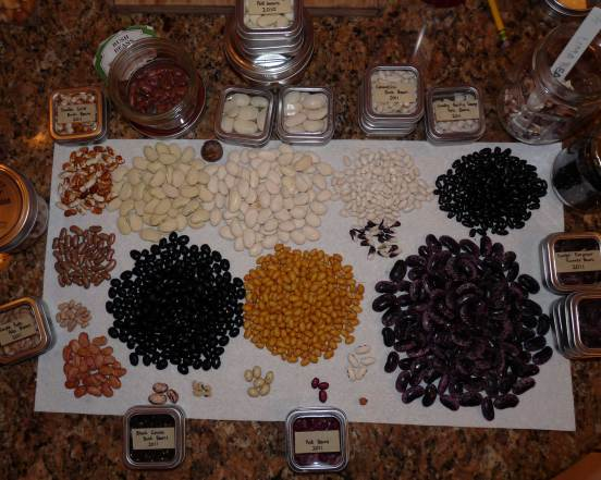 Dried Bean Varieties